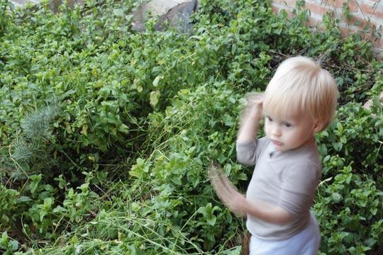 Em outro quintal da casa, manjericão, alecrim, hortelã em abundância.