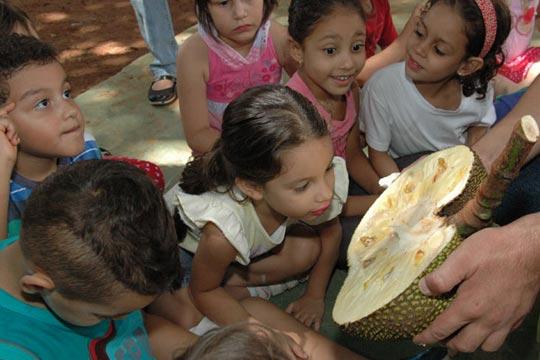Estudantes aprendem sobre as frutas brasileiras no Festival de Verão.