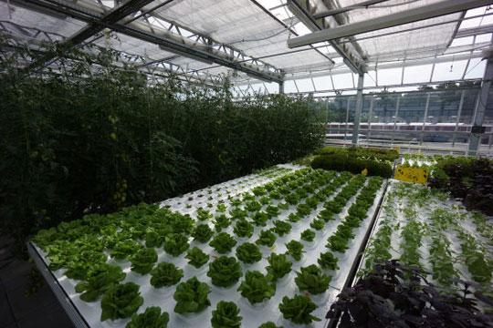 Espaço da Urban Farmers.
