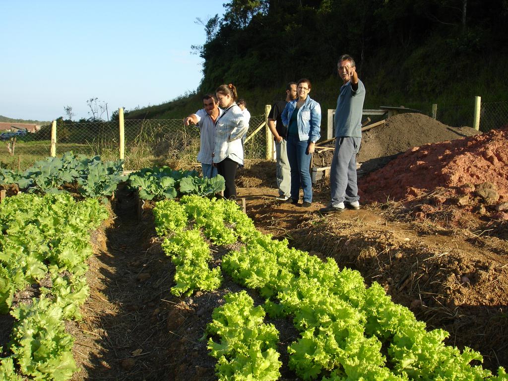 Horta comunitária no bairro Panaguamirim, em Joinville (SC)