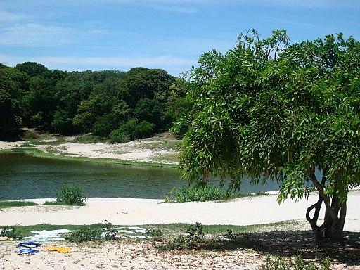 Parque Metropolitano do Abaeté, em Salvador (Bahia)