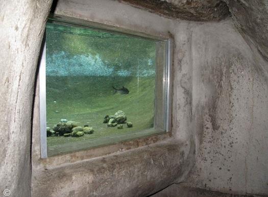 aquária nas paredes de parque subterrâneo