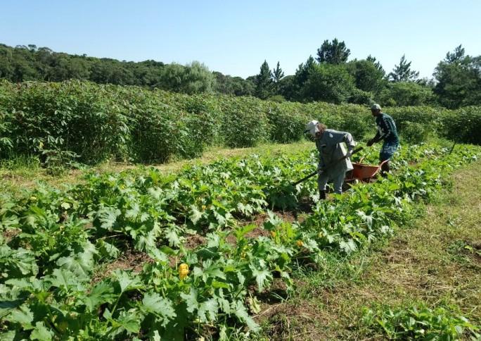 Cooperapas aposta no alimento orgânico como transformador das relações entre comunidade e território