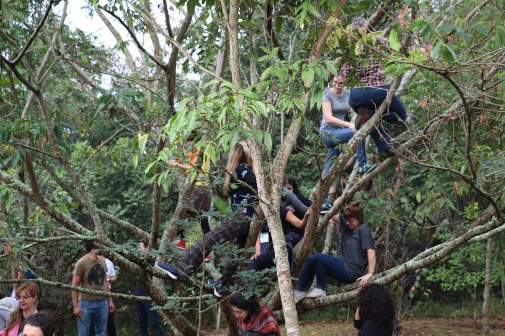 adultos sobem em árvores do sesc interlagos