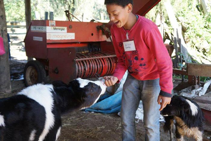 criança em escola zeferino lopes alimenta bezerros