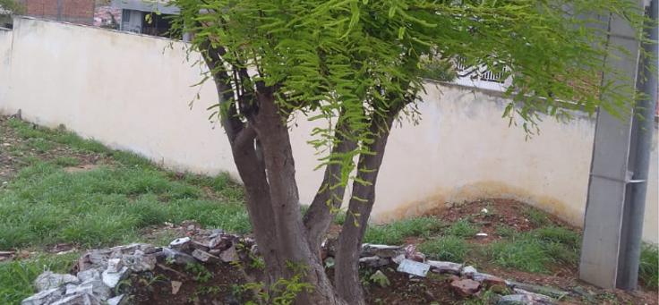árvore plantada na área revitalizada