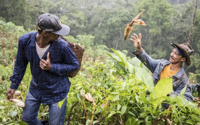 Urias Morato com o filho Eulisses Morato, num puxirão em sua roça de milho, Quilombo São Pedro, Vale do Ribeira (SP) / Crédito: Claudio Tavares-ISA